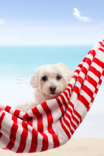 Cute puppy dog relaxing by the beach Stock photo © lovleah