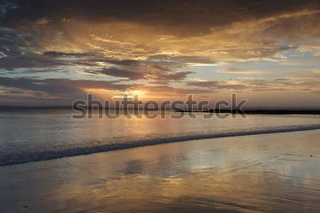 Gün batımı renkler sakin lahana ağaç plaj Stok fotoğraf © lovleah
