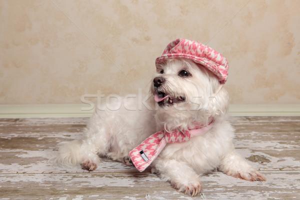 Sevimli köpek rustik kereste zemin terriyer Stok fotoğraf © lovleah