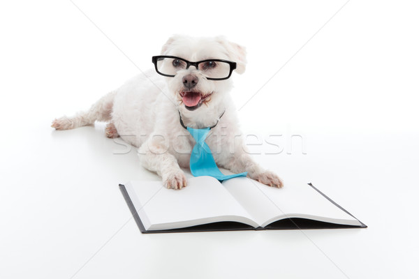 Stock photo: Dog Puppy Education Training