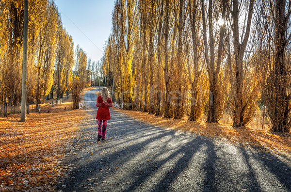 Poplars along rural country road Stock photo © lovleah