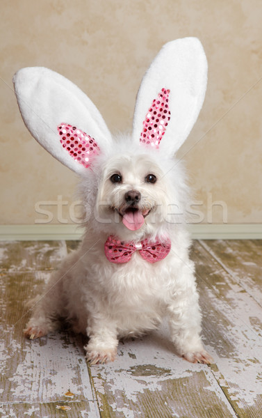 Puppy dog wearing bunny rabbit ears costume Stock photo © lovleah