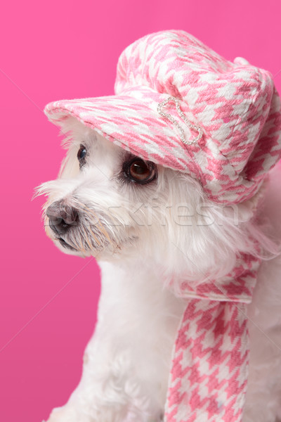 Fluffy dog wearing winter fashion Stock photo © lovleah