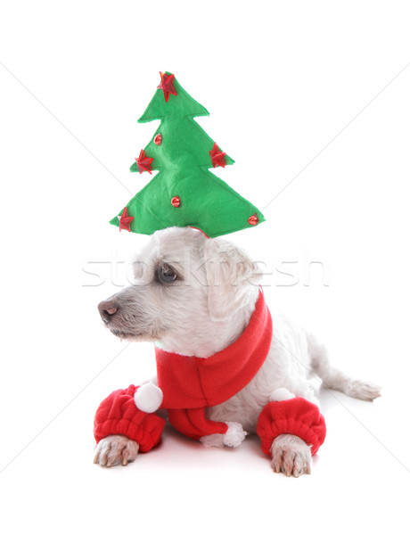 Puppy dog at Christmas time Stock photo © lovleah