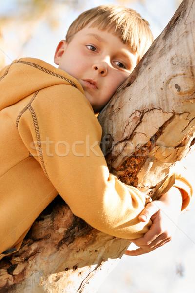 Chłopca limb guma drzewo Zdjęcia stock © lovleah