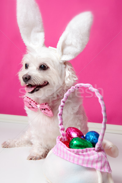 Happy dog at easter  Stock photo © lovleah