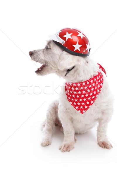 Barking Biker Dog Stock photo © lovleah