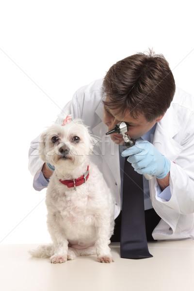 Stockfoto: Dierenarts · honden · oren · dierenarts · huisdier · hond