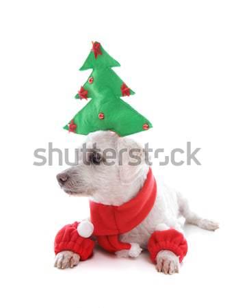 Cute Christmas pet dog Stock photo © lovleah