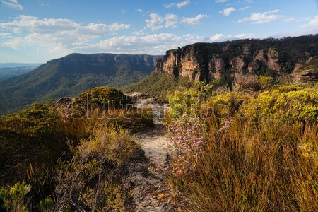 Walking track in Blue Mountains Australia Stock photo © lovleah