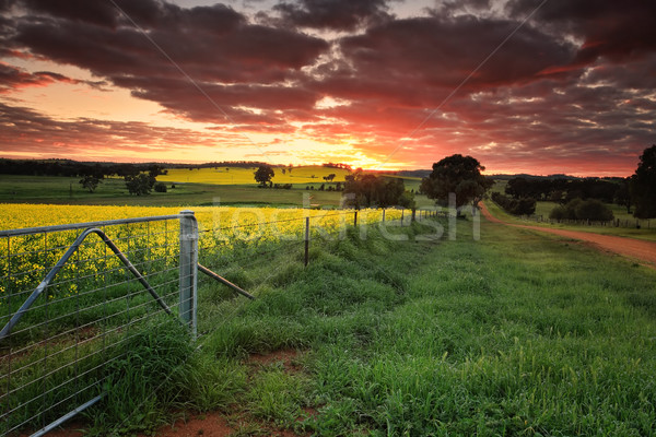 Sunrise farmlands Australia Stock photo © lovleah