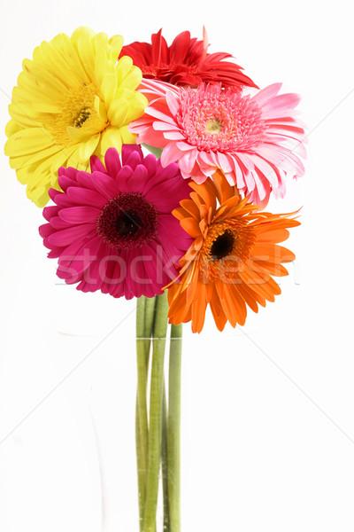 Сток-фото: ваза · различный · ярко · Ромашки · разнообразие · желтый