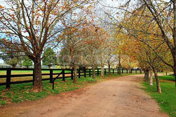 Boom onverharde weg najaar loof bomen weg Stockfoto © lovleah