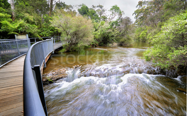 Fast flowing water at the approach to Fitzroy Falls Australia Stock photo © lovleah