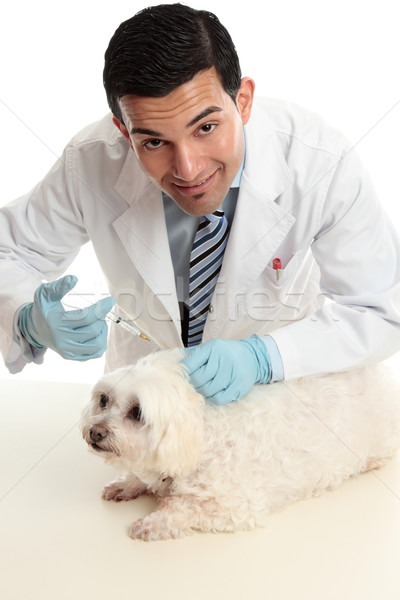 Vet treating a sick animal Stock photo © lovleah