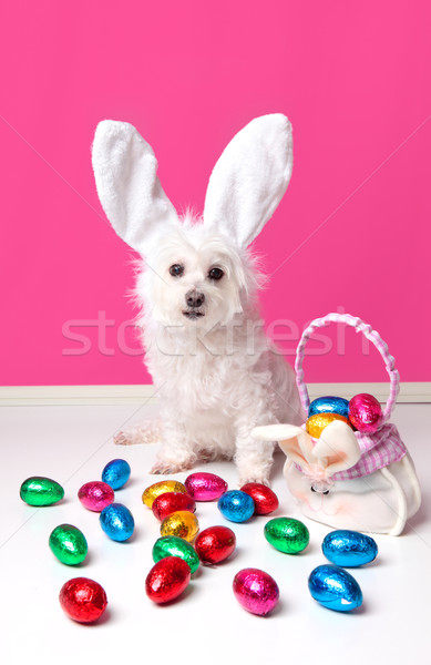 Pretty dog with bunny ears and easter eggs Stock photo © lovleah