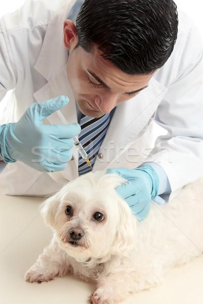 Vet inserting a needle syringe into pet Stock photo © lovleah