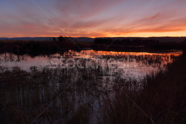 Sunset Penrith Wetlands Stock photo © lovleah