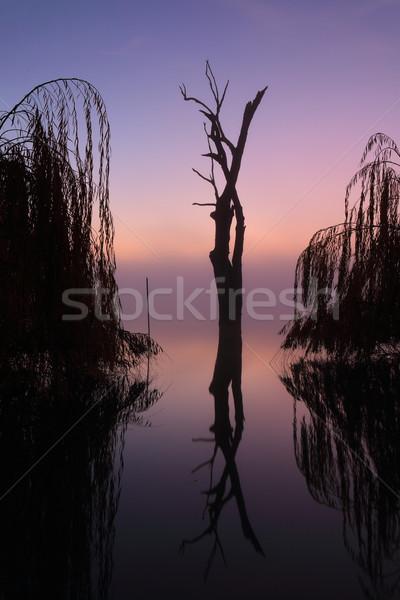 Mistig bomen meer zonsopgang mist Stockfoto © lovleah