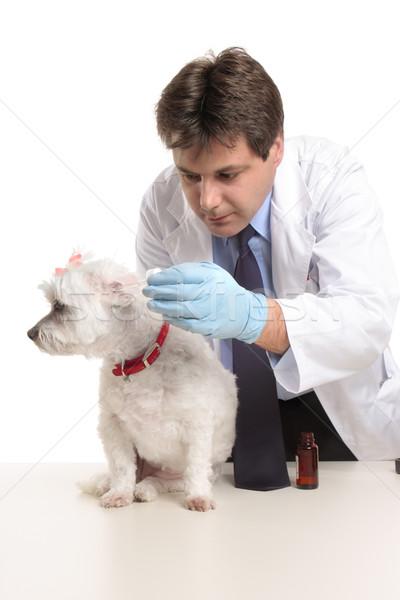 Veterinario perros orejas masculina dosis medicina Foto stock © lovleah