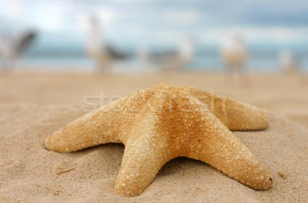 Starfish sable up plage de sable peu profond Photo stock © lovleah