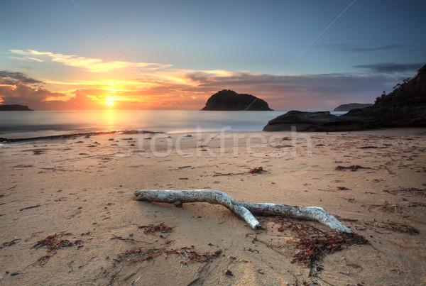 Sunrise views to Lion Island Stock photo © lovleah