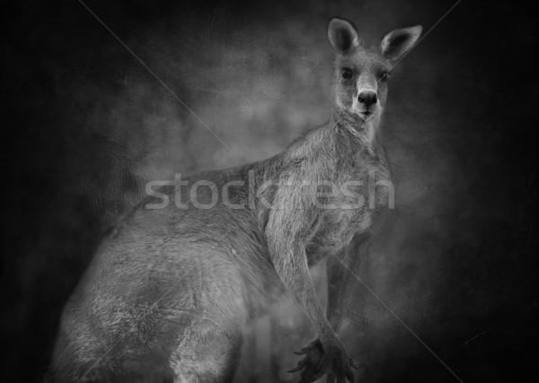 Canguro bianco nero orecchie parola Foto d'archivio © lovleah