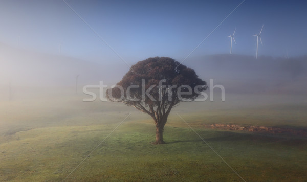 Rolling hills with morning fog lonely tree and windmills Stock photo © lovleah