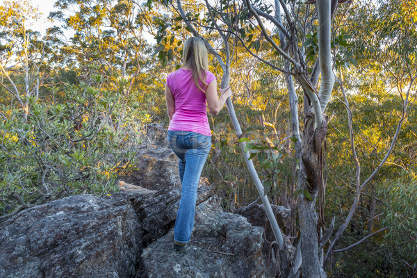 Standing high up on rock ledge  in the tree canopy Stock photo © lovleah