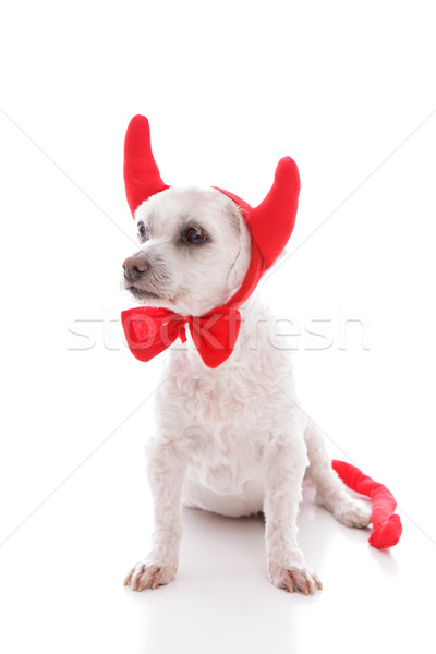 Naughty Devil Dog Stock photo © lovleah
