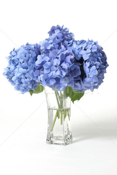 Hydrangeas in vase Stock photo © lovleah