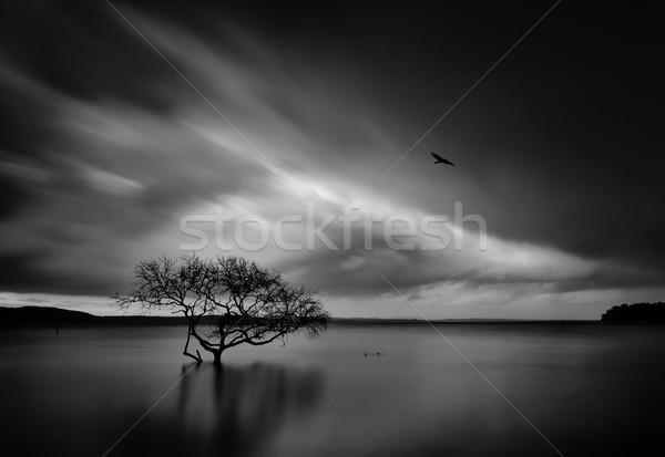 Sturm bewegen Baum Wasser Hochwasser Stock foto © lovleah