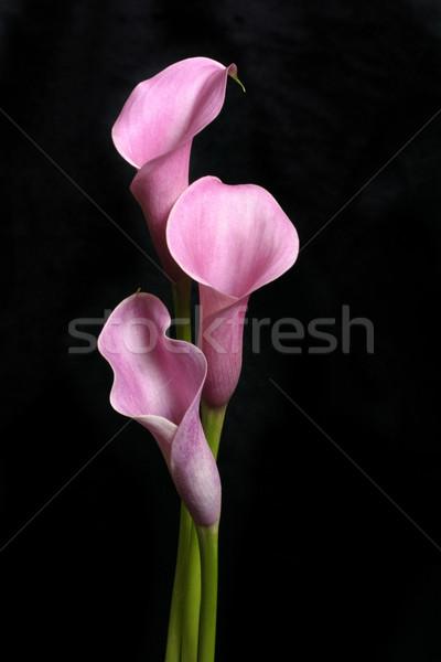 Három fekete csinos áll termény hosszú Stock fotó © lovleah