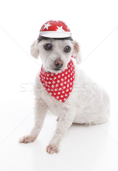 Kutya visel bicikli sisak fejpánt fehér Stock fotó © lovleah