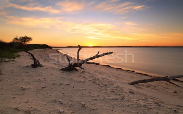 Ultimo sole punto spiaggia driftwood l'esposizione a lungo Foto d'archivio © lovleah