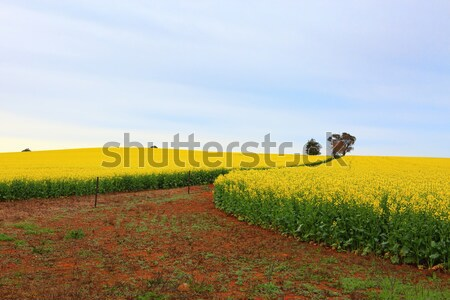 Bloei velden boerderij groeiend rijke Rood Stockfoto © lovleah