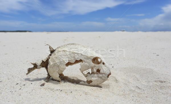 Pesce scheletro conservato scale spiaggia sabbia Foto d'archivio © lovleah