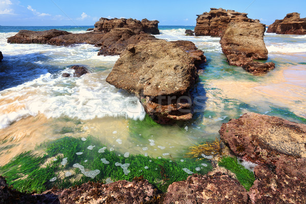 Seagrass plants among the rocks at low tide, Australia Stock photo © lovleah
