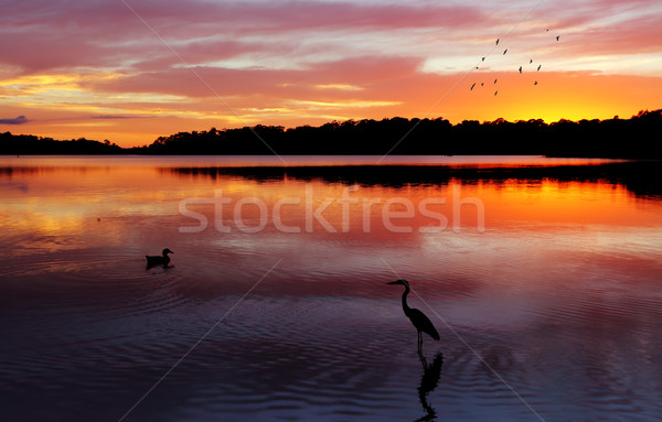 Sunrise Narrabeen Lakes Stock photo © lovleah