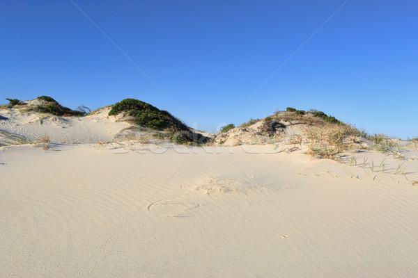 Sabbia duna vegetazione cielo blu blu ambiente Foto d'archivio © lovleah