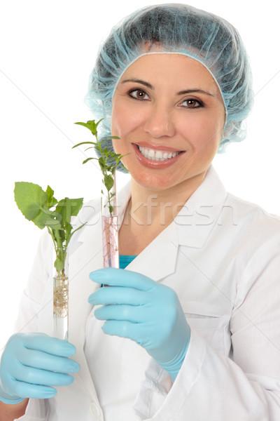 Test tube plants Stock photo © lovleah