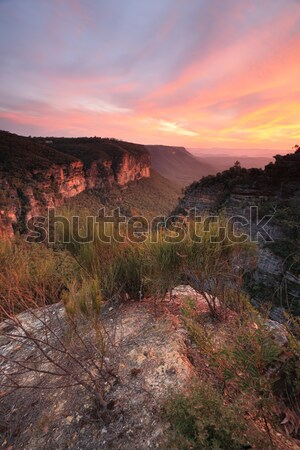 Spectacular views into Nellies Glen from Katoomba Stock photo © lovleah