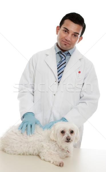 Dierenarts ziek huisdier dier hond medische Stockfoto © lovleah