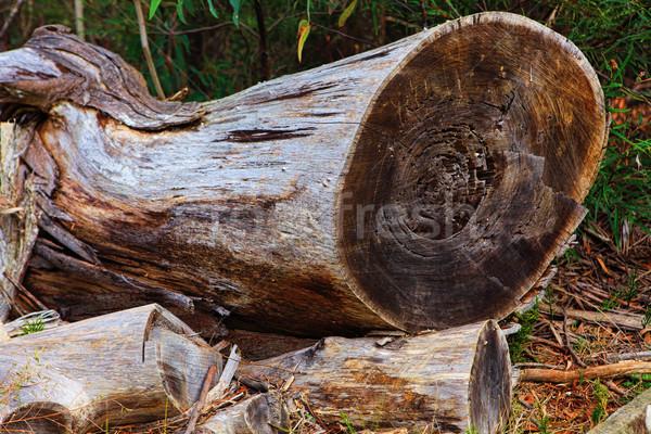 Felled Tree Stock photo © lovleah