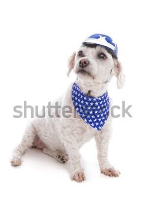 Kutya visel sisak fejpánt aranyos kicsi Stock fotó © lovleah