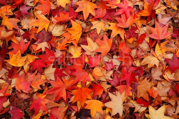 Fallen leaves in Autumn Stock photo © lovleah