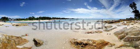 Tourists on vacation at Currarong Australia scenic Parorama Stock photo © lovleah