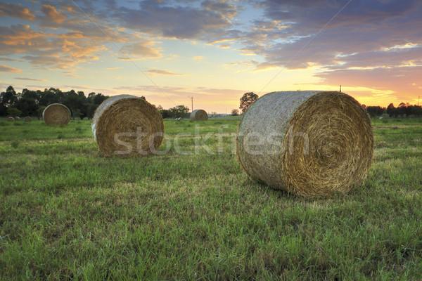Feno campos bastante nascer do sol céu molhado Foto stock © lovleah