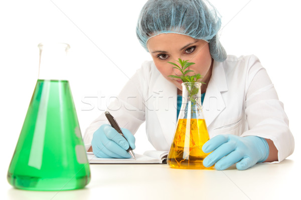 Scientist botanist studying plant Stock photo © lovleah