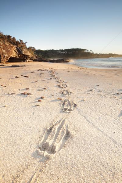 Kanguru kum taze ayarlamak etrafında Stok fotoğraf © lovleah